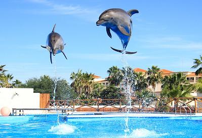 Dolphin Always (17)