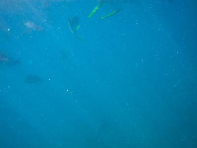 LDP_Cabo2015_Trip-14-2