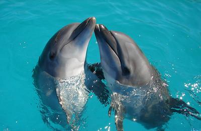 Dolphin Always (1)