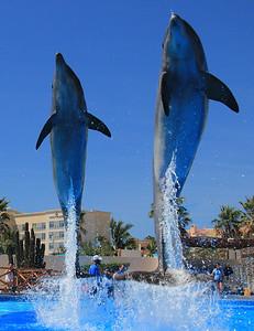 Dolphin Always (16)