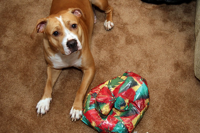 Tara's dog Keylo gets a present. Can he open it?