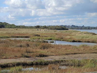 Hengistbury Head Oct 2013 008