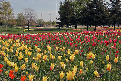 "Tulip gardens at ""Window on the Waterfront"""