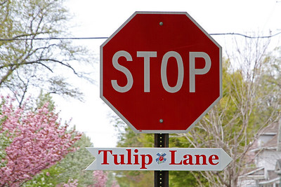 Tulip Lane, this way!