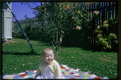 Type: Kodachrome. Number 31 (red).