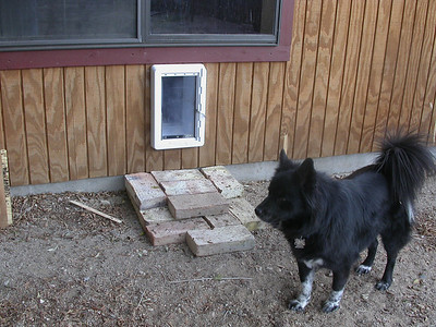 Psammy posing with her dog door and semi-custom steps.