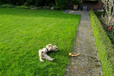 Happy Hund