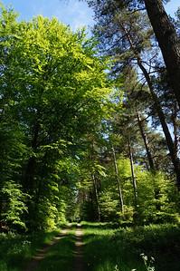 Im Dämmerwald