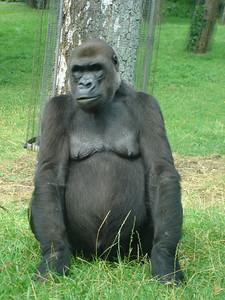 Arnhem Zoo