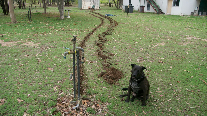 """While I was digging the shallow trench (shallow: 2 reasons: lazy is one : did not want to cut too many tree roots) with the grubber / mattock, Spanner kept checking it like he thinks I am looking for his buried bones. """"Sorry mate as I didn't find any""""Poly pipe system with yellow tape, I put in some 20 years ago, from the pressure pump, but through our filter. The taller one with 'wobble' spray head is from our gasoline powered engine/pump combination at one of our in ground dams but through a larger stainless mesh filter. This new trench is for a outlet direct from pressure pump, no filter. Just to hose trees, was a car maybe, fill buckets etc."""