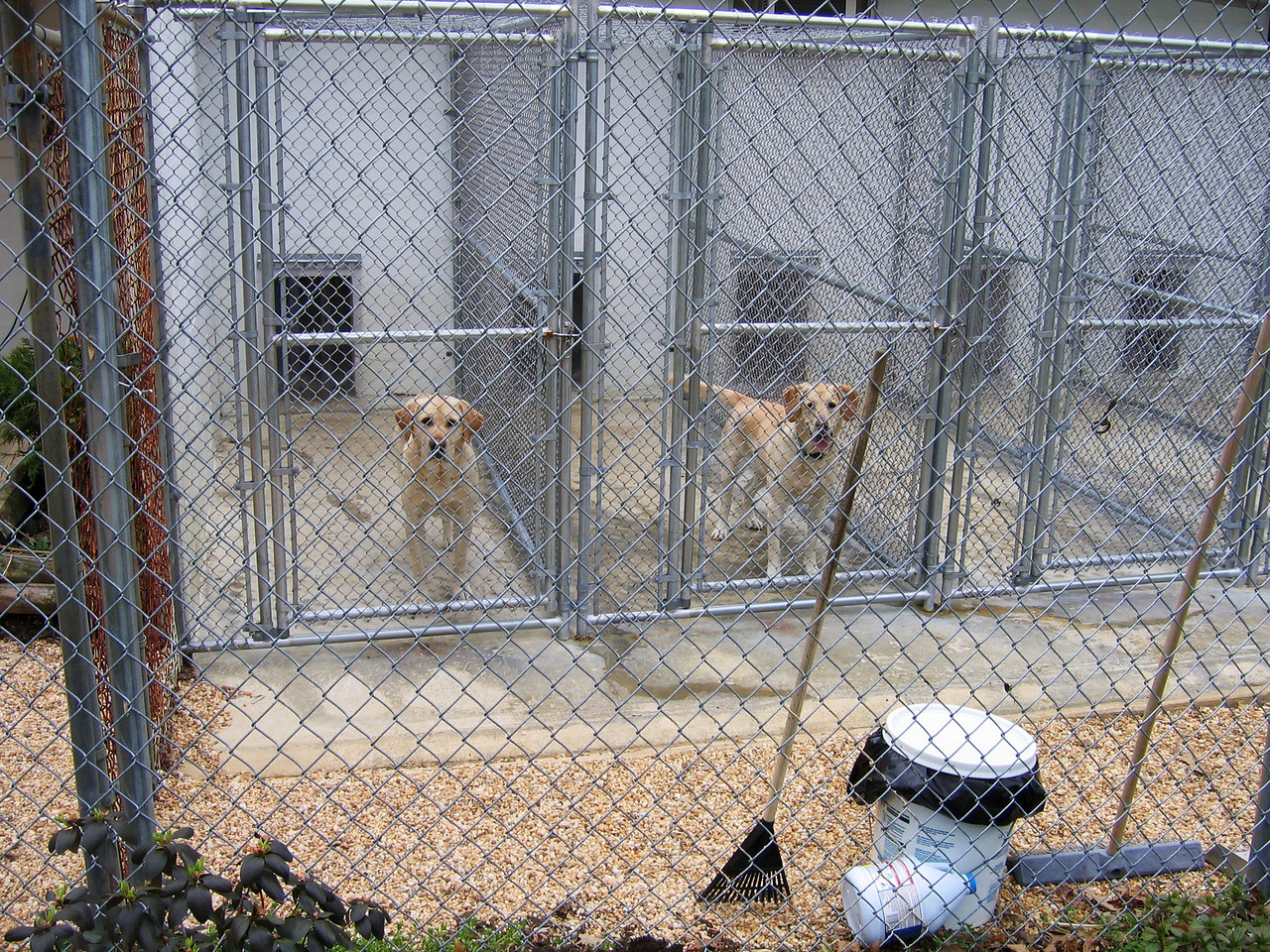 The kennels are adjacent to each other and they can go in our out as they choose.  We can keep the dogs together and get a small discount for doing so.  They match up dogs and personalities before going to the play area.  There is a time out room in the back for those dogs who do not get along with the others.