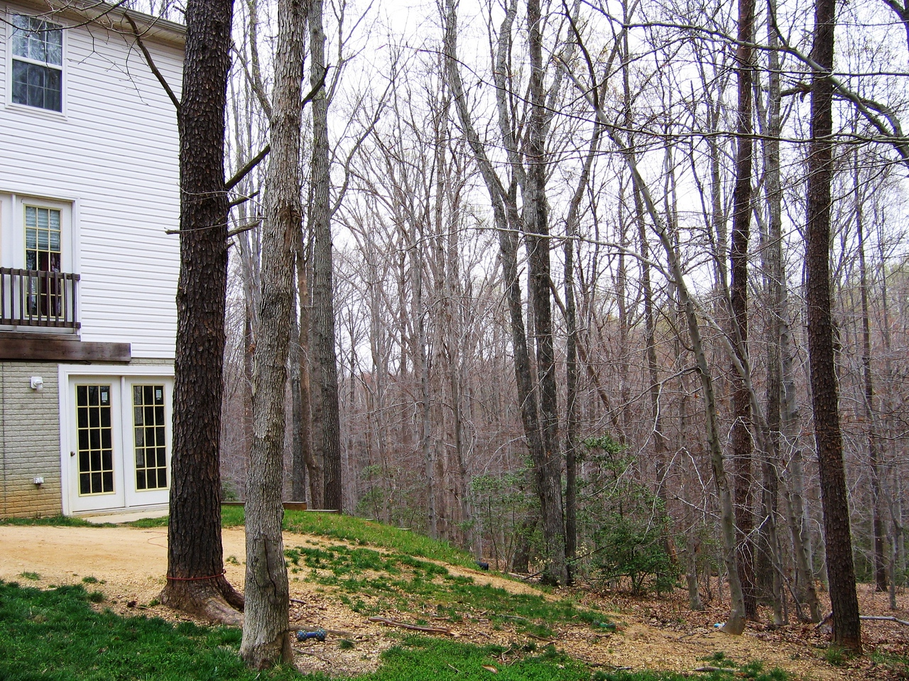 A view of the right side from the back of the house.  Note the sloping yard back towards the woods.