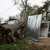 A tree that fell onto a garage when hurricane Ike went through Houston.