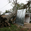 A tree that fell onto a garage when hurricane Ike went through Houston.