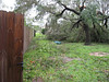 A blurry shot of the same tree and the wind warped fence between my parents and brother.