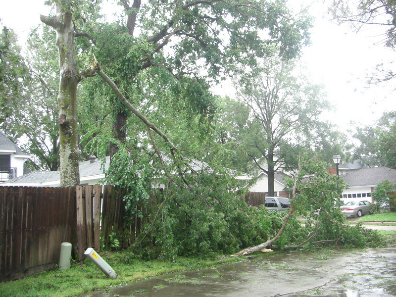 Tree down in our driveway
