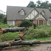 This is the tree that fell down across Chevy Chase.