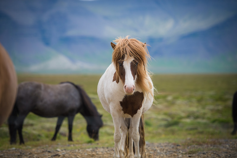 "We named him ""Pantene"", the best mane model!!!"