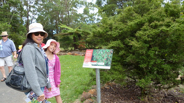 Illawarra Tree Top Walk