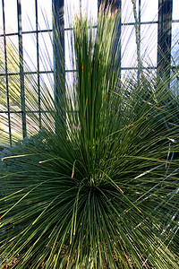 Giant cactus.