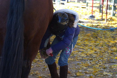 Anisa cleaning out the hoofs of her pony GInger.