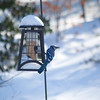 After we got the 17 inches of snow, Anisa filled up the bird feeder and there was a lot of traffic on it.  A blujay sitting on it right now.