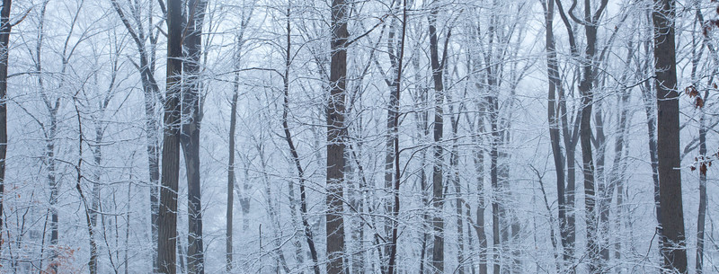 The first snowfall of the season.  It was not more than a few inches but the view out of the living room was simply amazing.