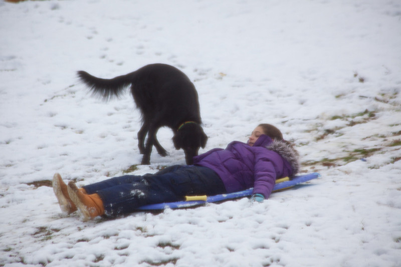 Anisa was sick but simply had to go out and sled down the hill.  Of course shadown has to try to steal her board!