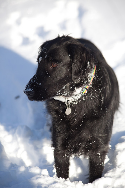 Shadow out in the snow.