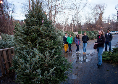 Picking out a tree!