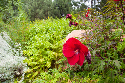 Red Butte Garden. PC Anisa Iqbal