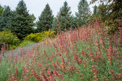 Red Butte Garden PC Anisa Iqbal
