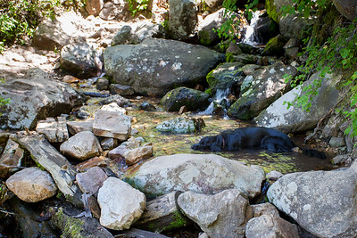 Shadow was so happy to cool down.  He really enjoyed scampering around with a tail that would not stop wagging.