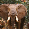 Elephants do live in Reno.