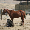 A mom with her baby.  The mares and colts were kept away from the males.