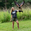 Harris Hawk, Iowa Raptor Center