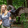 Turkey Vulture, Iowa Raptor Center