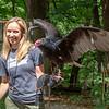Turkey Vulture, Iowa Raptor Center