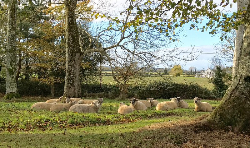 """The greeters as you enter and leave Ballymaloe.  """"Shaun?"""""""
