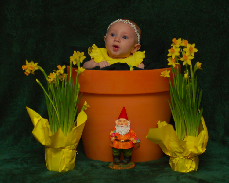 032011<br /> Look what popped up over the winter.<br /> Enjoy the beginning of Spring!