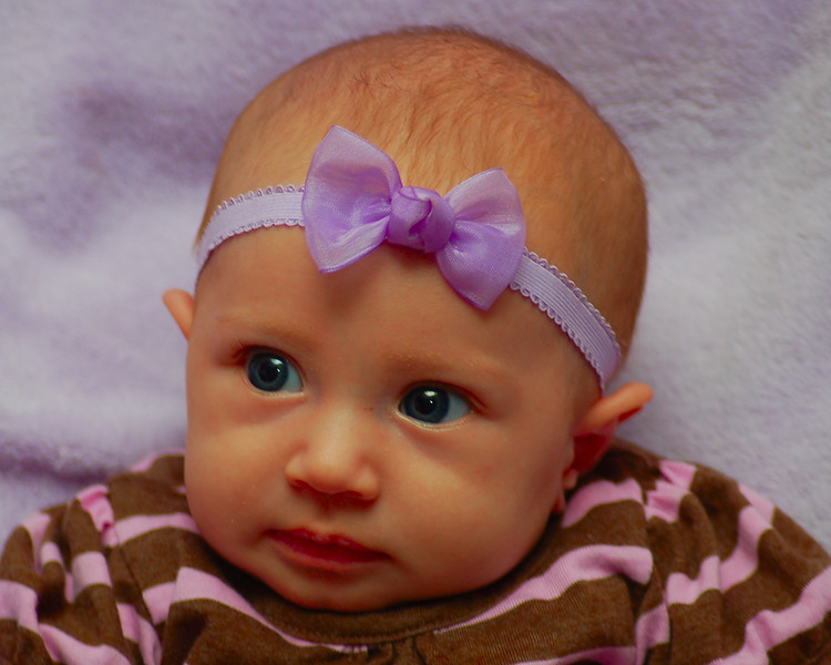 021011<br /> Izabella<br /> Just over 2 months old now. Kirby brought her over for a few pictures last night. Things didn't go too well but, one picture is enough.