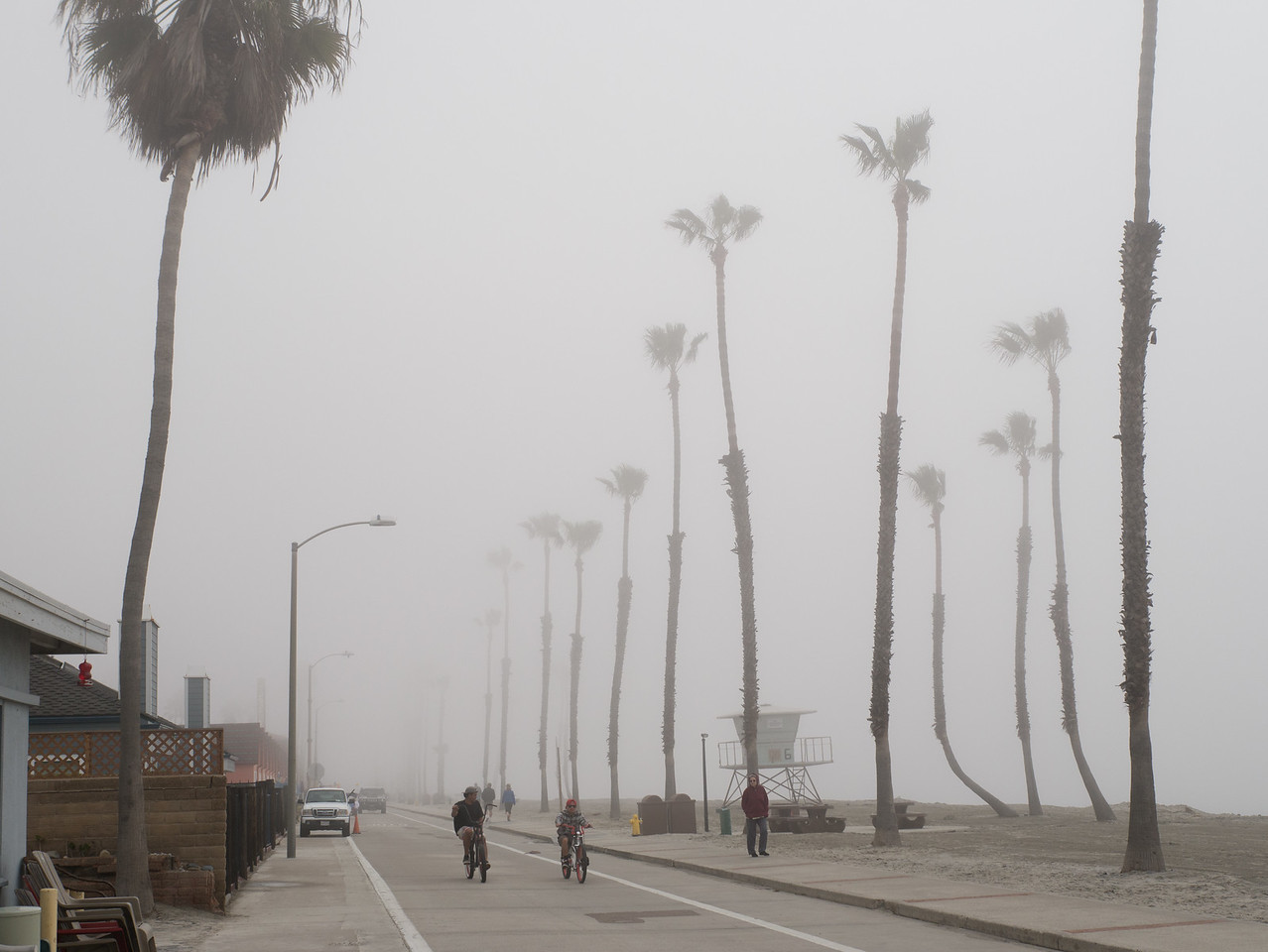Palm trees along the Strand fading into the fog