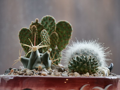 Tiny cacti in a tiny pot on their kitchen window shelf