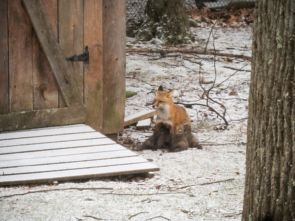 Snow on 7th day of Passover - and look what's by our shed!