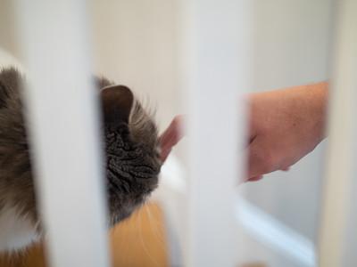 Bert & Rachel's cat inspects Carolyn's finger