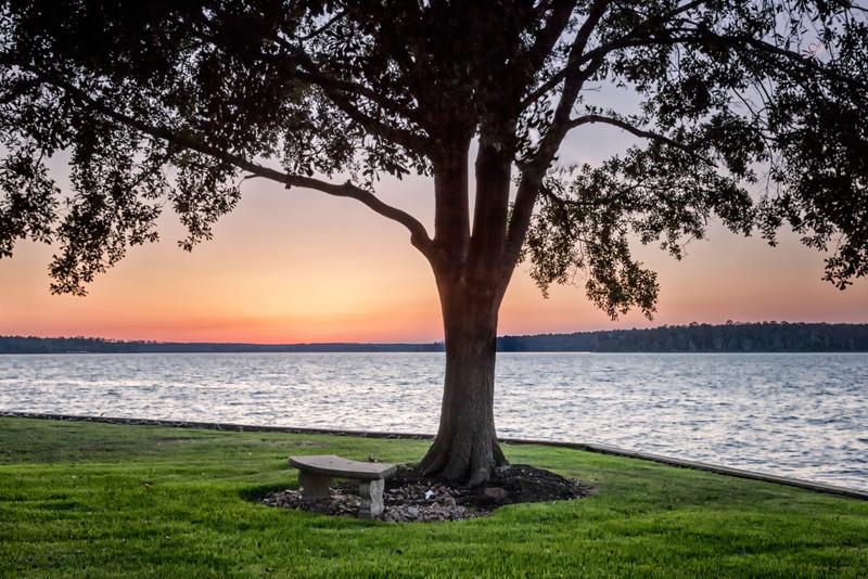 VICKI THOMASON MEMORIAL TREE