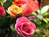 ISABELLE & BARRIE....ROSES FROM FRANCE....