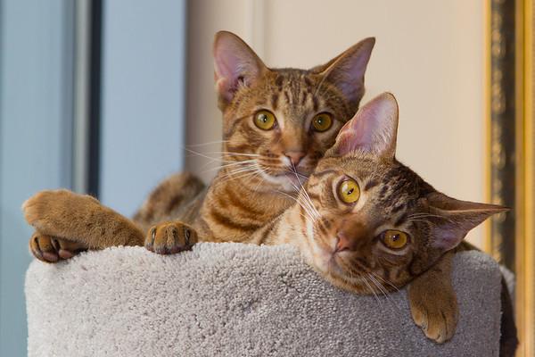 J&J's Kitty Pics