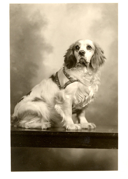 1940's ace joyce's_dog