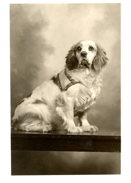1940's ace joyce's_dog